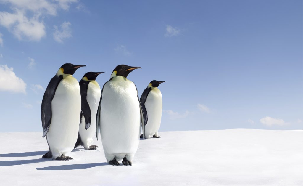 Google Penguin 3.0 is here - what to do now